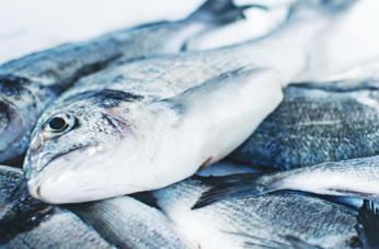 pescado-congelado-becogalia